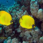 Safaga onderwater