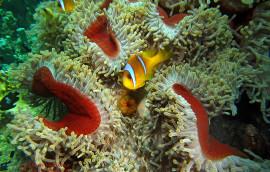 Safaga Onderwater Duiken