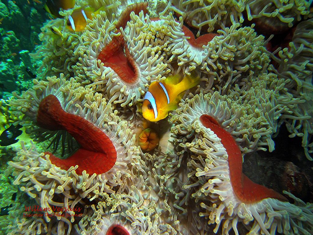 Nemo Safaga Onderwater